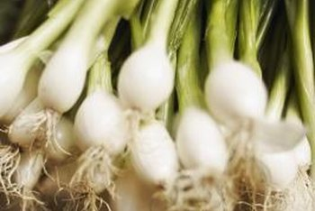 Snip the greens away from the bulb to regrow the onion's edible shoots.