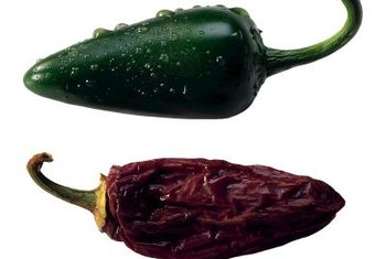 Jalapenos are used in many spicy dishes and used fresh, dried eaten pickled.