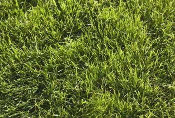 The management of grass nutrients can include changing the pH of the soil.