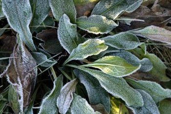 Covering sensitive plants on cold nights can prevent frost buildup.