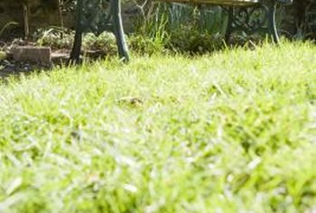 Excessive pesticide use can result in excessive thatch in the lawn.