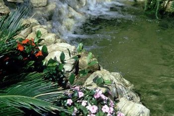 Many ponds are rimmed with rocks and plants that overhang the edges.