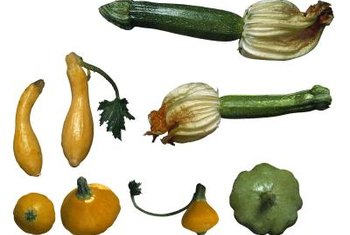 Summer squash can be served raw in salads or cooked.