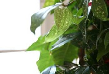 Bright filtered light and moisture keep houseplants growing vigorously.