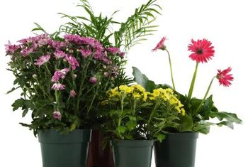 Houseplants can survive a dry week with some preparation.