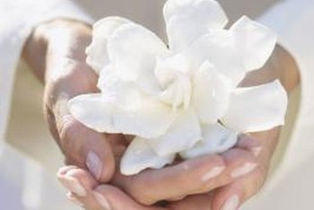 When happy, First Love gardenia rewards with palm-sized blooms.