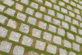 How To Install Square Concrete Pavers With A Ground Cover Widely Ed Allow Room For Plants Grow