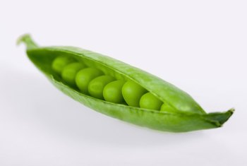 Green peas are roasted and coated with wasabi to produce a crunchy, pungent snack food.