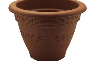 Choose a large pot for a mosquito plant to allow plenty of room for it to grow.