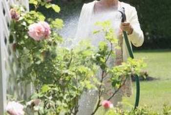 Watering plants early in the morning reduces water loss to evaporation.