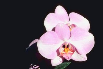 Orchids -- all of them -- are special.