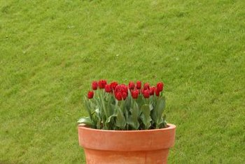 Containers of tulips provide a splash of spring color.