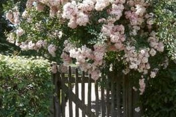 An entryway bedecked with climbing roses creates an inviting garden welcome.