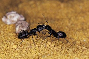Ants communicate and leave scent trails to food sources.