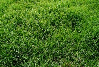 Grass is the most common cover for a septic mound.
