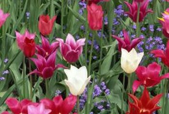 More than 1,700 varieties of tulips exist.