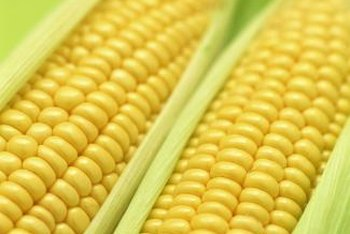 Sweet corn can grow without a large garden bed.