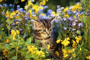 Cats sometimes dig up plants or chew on foliage.