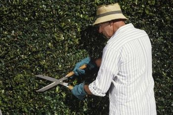 Using a lubricant keeps hedge cutters working smoothly.