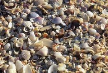 Crushed sea shells are a good source of calcium for plants.