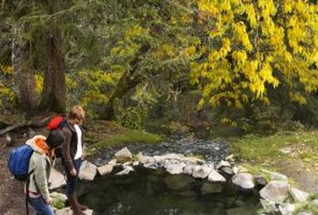 Studying natural ponds can help you garner ideas for your pond.