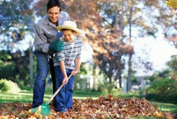 Rake leaves in autumn to shred them or let them decompose before spring.