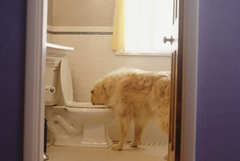 One member in your household could care less about the sounds from the toilet.