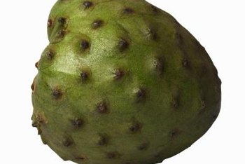 Cherimoya fruits have sweet, juicy white flesh and black seeds.