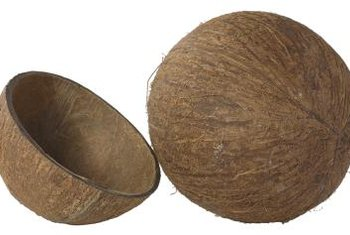 The fibrous exterior of the coconut provides water absorption in soil.