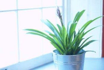 Most houseplants need bright light, water and fertilizer for healthy growth.