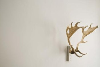 Choose an elaborate or modest style of antlers to use as curtain-rod holders.