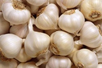 Aging garlic creates certain antioxidant properties not present in fresh garlic.