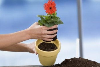 Incroyable Potting Soil Is Formulated For A Container Environment And May Be Plant  Specific.