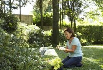 Lawns work well in large yards, provided they have areas of interest.
