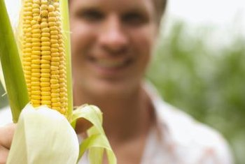 Healthy corn tends to have fewer pest and disease problems than unhealthy plants.
