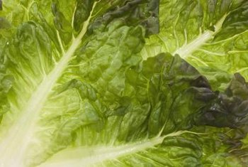 Lettuce tastes better when the excess salts are removed.