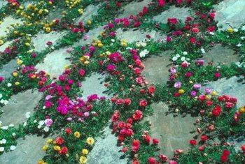 Certain ground covers can grow within any cracks, creating a softened path.