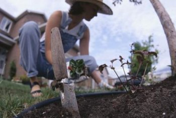 Pulling or digging weeds by hand is a free way to get rid of the unwanted plants.