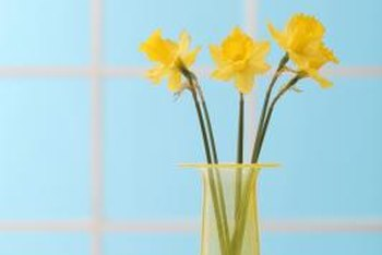 Indoor narcissus brings cheer.