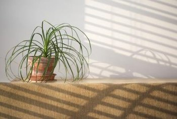 Use a shoelace to water your plant when you are away.