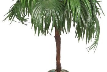 Some palms thrive in sunny locations, while others can tolerate lower levels of light.