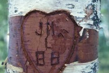 This expression of love girdled the tree's trunk, severely damaging the bark.