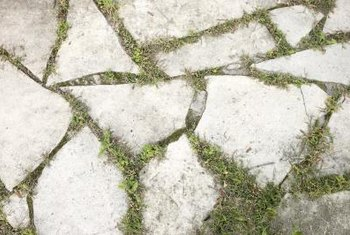 Plants growing in the cracks may eventually take over the patio.