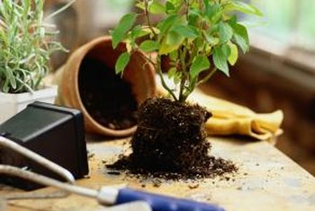 If the soil doesn't drain well, you may need to repot the houseplant.