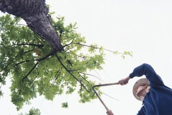 Appropriate tree-pruning equipment depends on tree size.