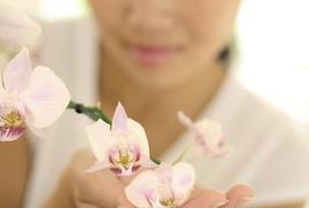 Orchids are easy to grow, as long as you are careful about their setup.