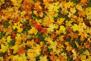 Shredded leaves provide nutrients and ground cover for plants.