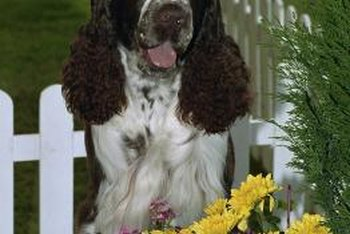 Fencing around toxic flowers can protect a dog from possible poisoning.