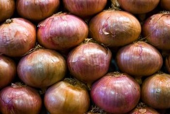 Red Wethersfield onions are an heirloom onion grown for their mild flavor.