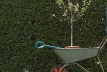 Newly planted trees benefit from stabilizing stakes while roots establish in the soil.